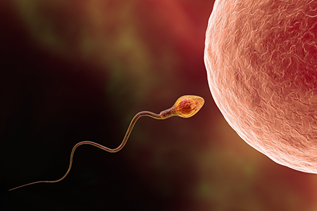 Conception happens when the fastest and the strongest sperm cell reaches the egg cell.